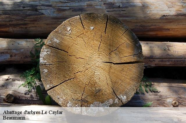 Abattage d'arbres  le-caylar-34520