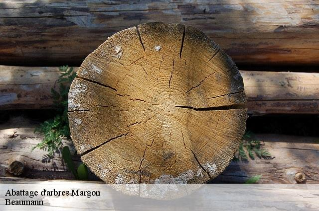 Abattage d'arbres  margon-34320
