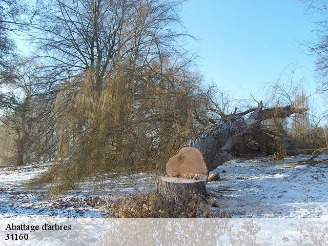 abattage arbre professionnel